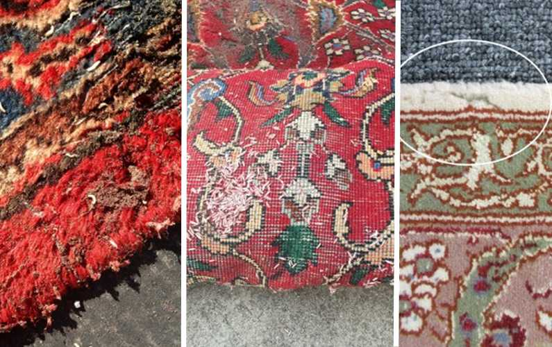 MOTHS, CARPET BEETLES, AND SILVERFISH. PROTECTING RUGS FROM BUGS